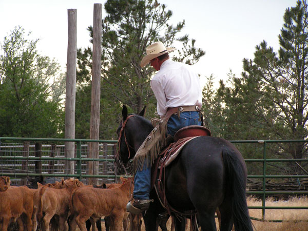July 4th Cattle, Gould Ranch Cattle Company