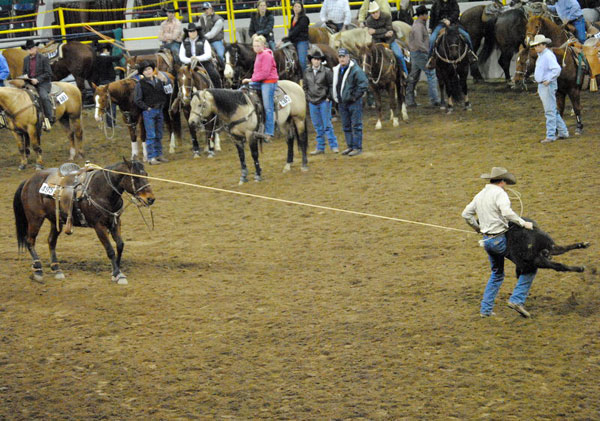 Bay Calf Roping, Gould Ranch Cattle Company