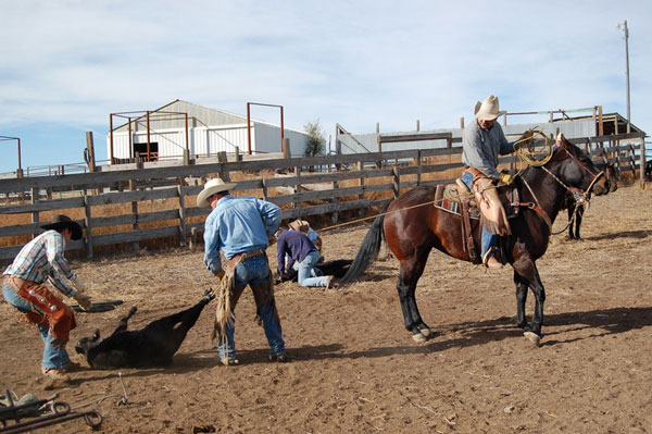 Branding at Gould Ranch Cattle Company