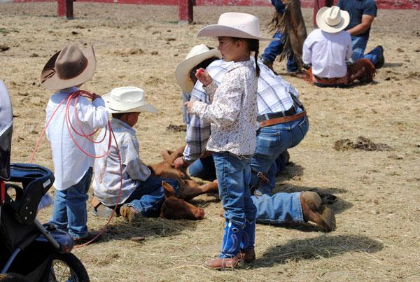 Branding Longhorns, Gould Ranch Cattle Co.