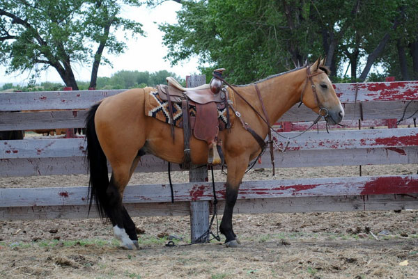 Horse, Gould Ranch Cattle Co.