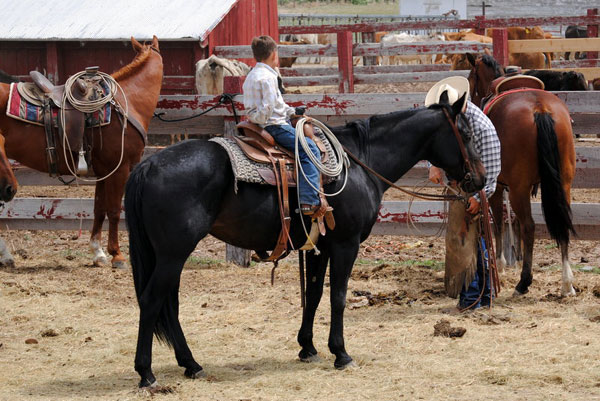 Horses, Gould Ranch Cattle Co.