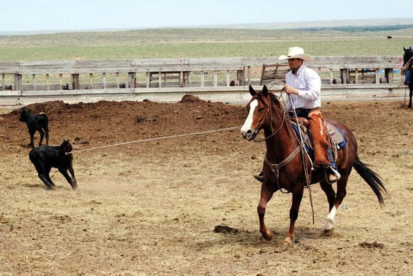 Branding at Gould Ranch
