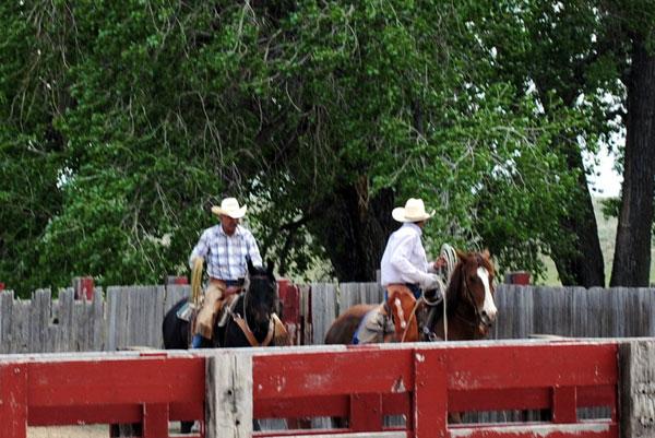 Branding, Gould Ranch Cattle Co.