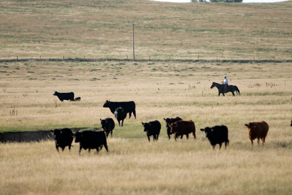 Gould Ranch Cattle Co.