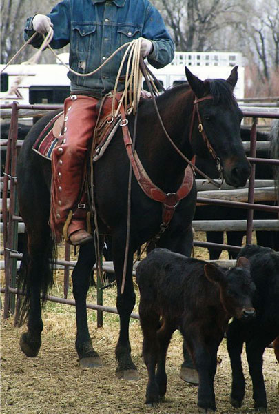 Horses, Gould Ranch Cattle Company